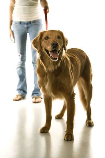 woof orlando, dog walking, pet services, pet boarding