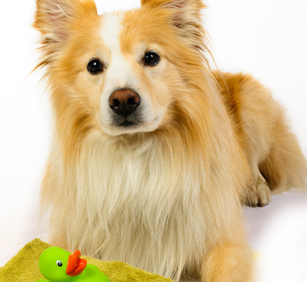 woof orlando dog training, dog walking, dog kennel